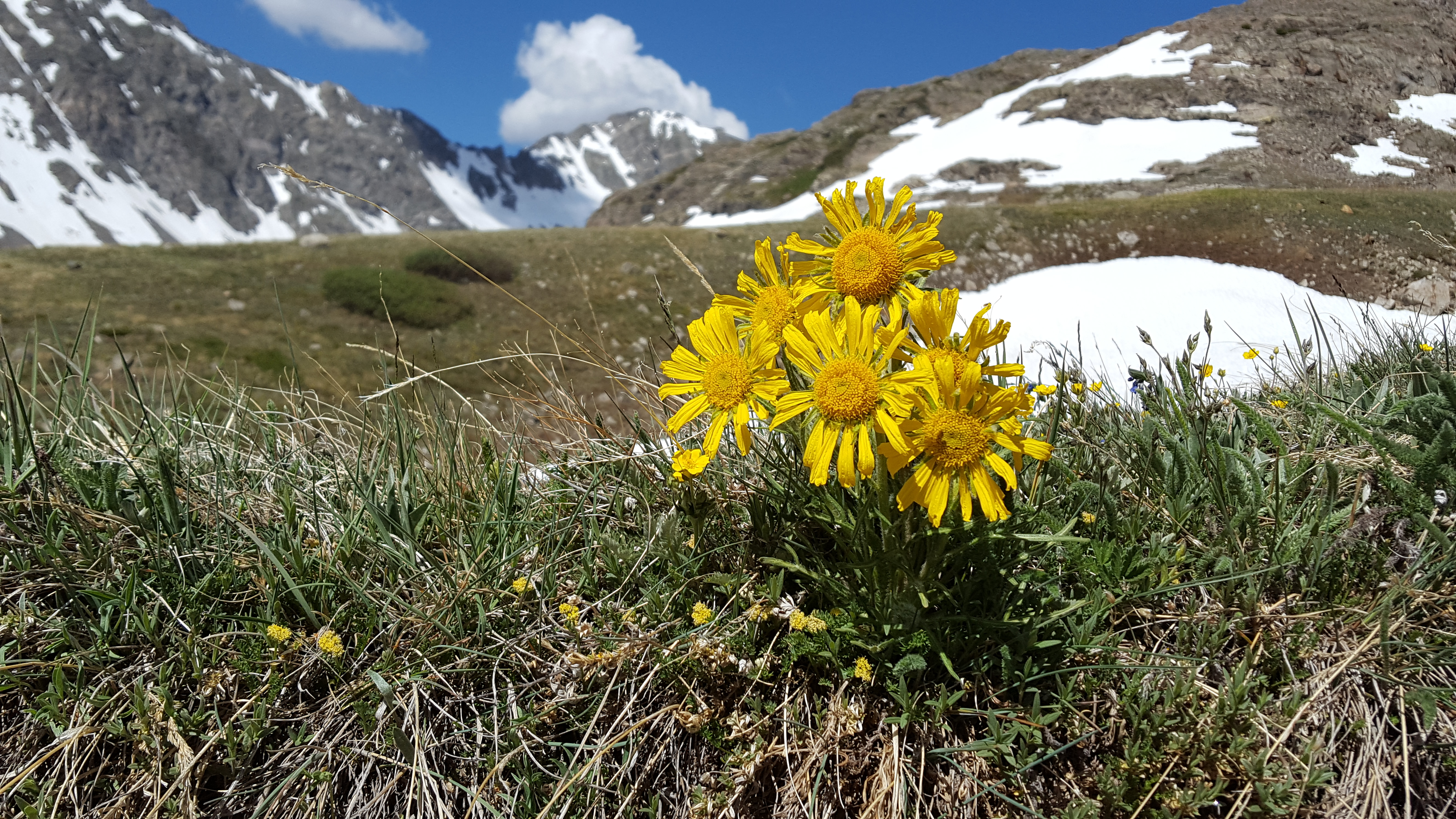 Wildflowers on a Breckenridge hike