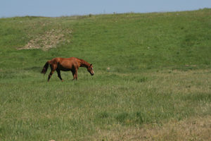 Ruby Ranch is a gated horse community in Silverthorne