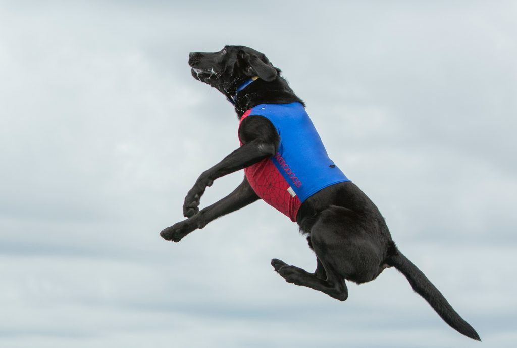 a dog jumps up like the interest rates on second homes