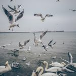 Birds flocking to food