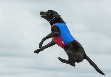 a dog jumps up like interest rates on second homes